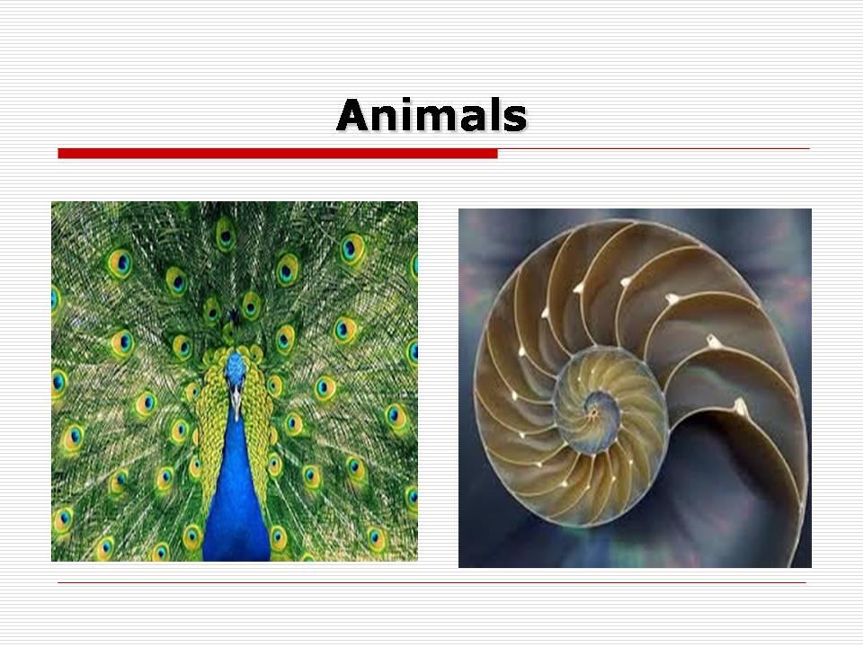 applications of mathematics in art - fractals